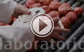llegada-patata