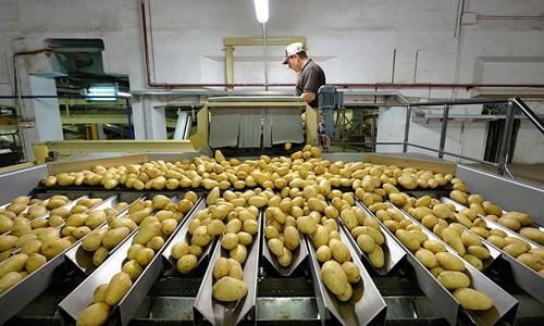 Un buen distribuidor de patatas cuida el producto desde una primera selección hasta la mesa