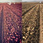 Recetas con patatas nuevas